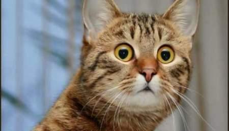 Кот, бегущий по лезвию: Китай запустил массовую продажу клонированных животных