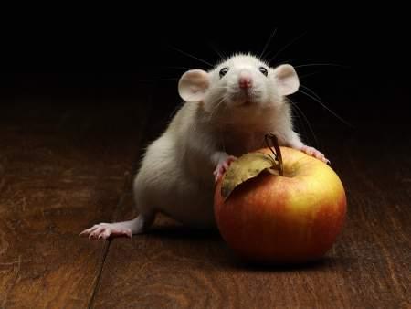 Вишневский, или Петербургская «крыса» подводит итоги