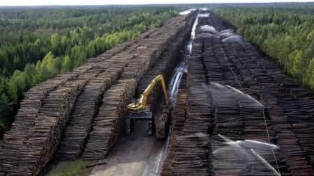 Глобальная экологическая мировая проблема: массовая вырубка лесов