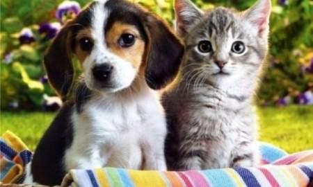 Благодаря поправкам в Конституцию РФ животные будут под защитой — директор фонда «Я свободен»