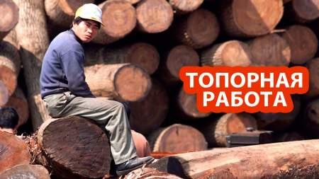 Китай впечатлила жесткая реакция России на его попытку вырубить сибирский лес