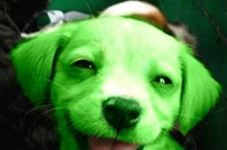 Wonderful® Pistachios необычно отмечает рождение зеленого щенка